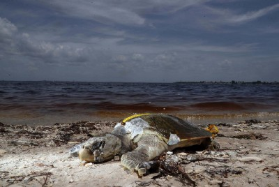 Fighting the Red Tide