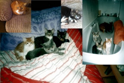 The Beauty, Pain and Agony of having Cats and other Pets
