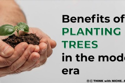 Benefits Of Planting Trees In The Modern Era
