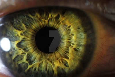 Eye Tracking—The Next Evolution in Virtual Reality