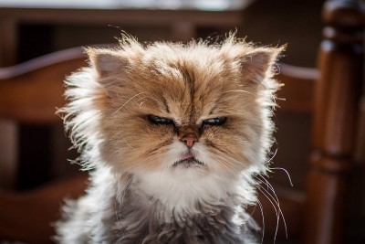 I Have Angry Fatigue