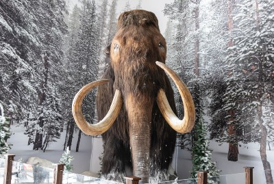 A Bioscience and Genetics Company Wants to Bring Back the Woolly Mammoth