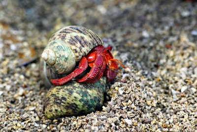 You're Like a Hermit Crab