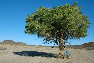 Mongolia—The Vanished Forests of the Gobi Altai