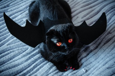 10 Pets That Are Having The Worst Halloween Ever