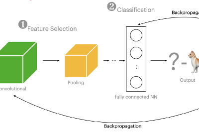 What happens in a deep learning image classifier?