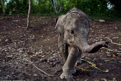 Save Us, We Have The Right To Live: An Open Letter From An Elephant
