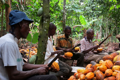 Building a Sustainable Cocoa Value Chain in Nigeria