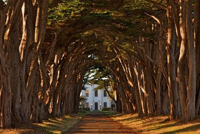 Shift Happens newsletter issue #10: A time machine behind the cypress trees