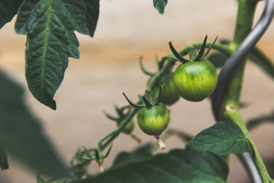 What You Need to Know: Helikon's Analysis of the 2021 SynBioBeta Food and Agriculture Conference