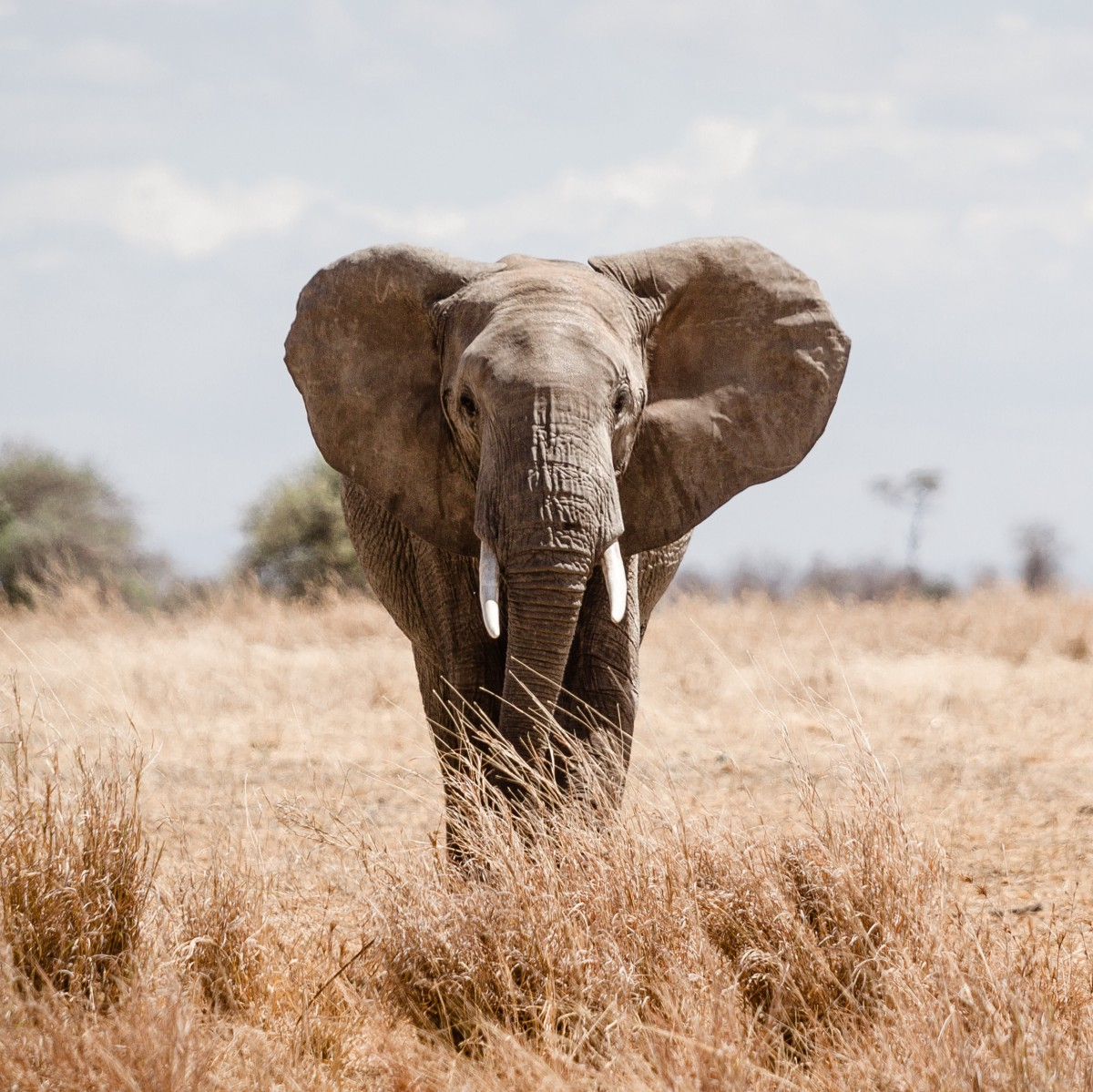 The Illegal Wildlife Market Is Booming. Encrypted Messaging Makes It Worse.