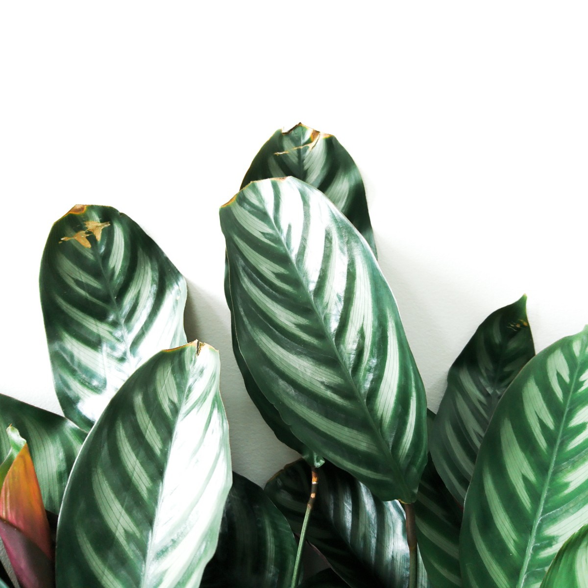 Doom and Bloom: The Growing Millennial Obsession with Houseplants