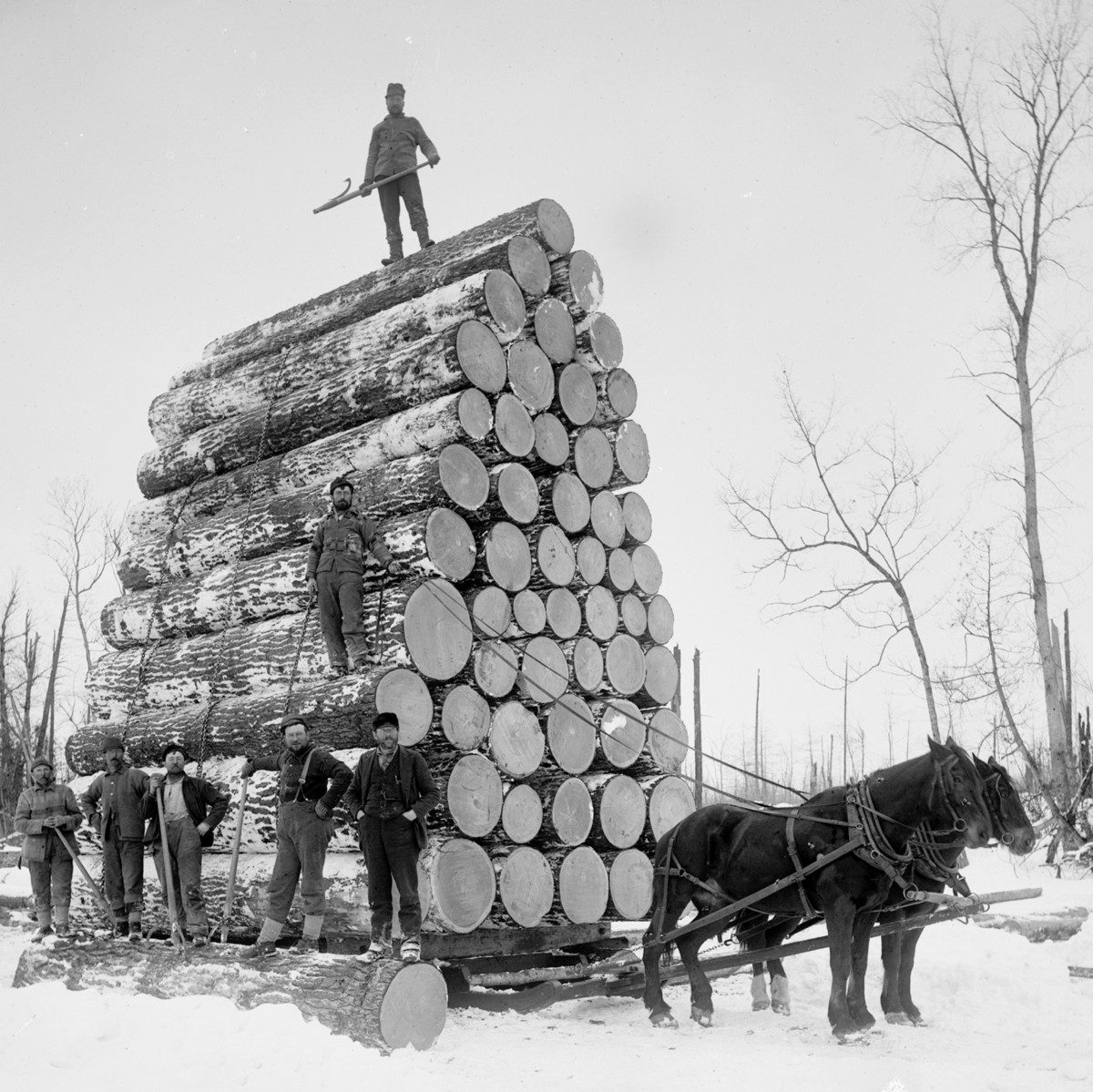 The first American settlers cut down millions of trees to deliberately engineer climate change