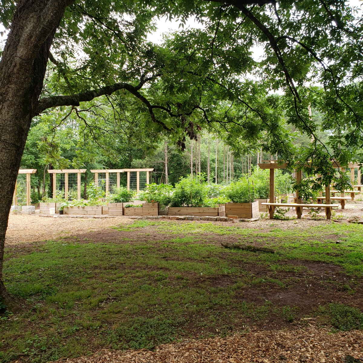 Inside Atlanta's First Food Forest