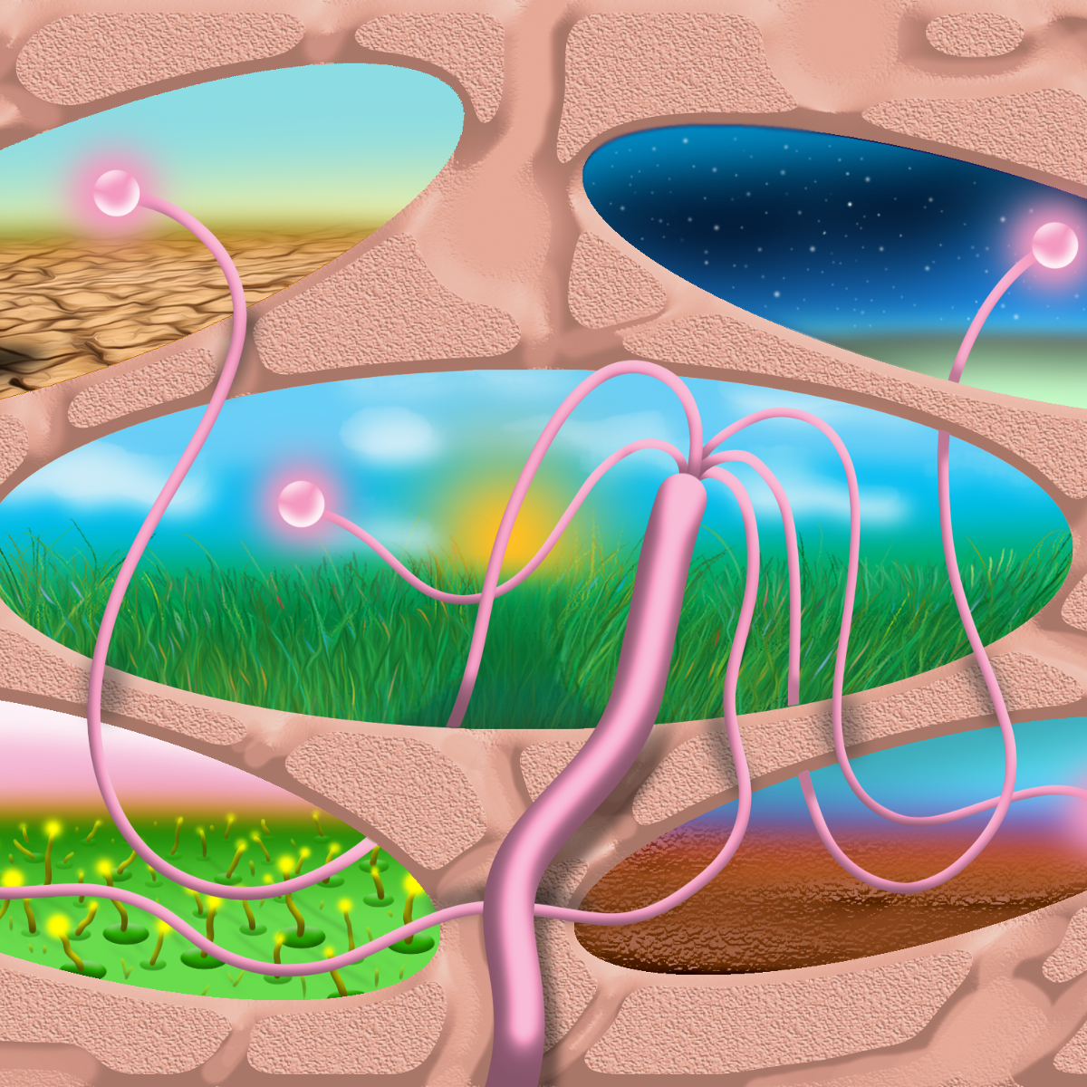 Psychedelics for Healthy People