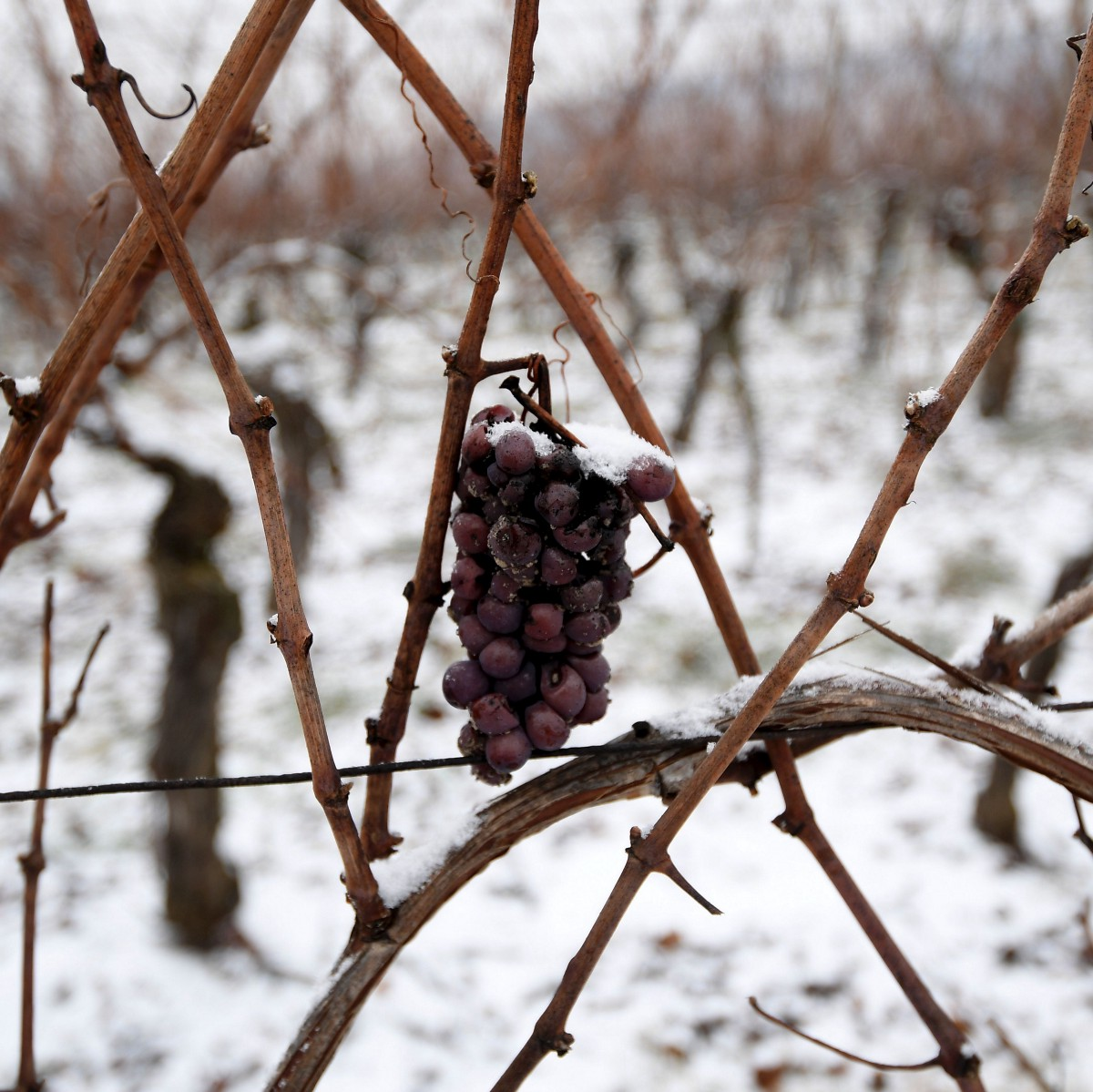 The Future of Wine: No Corks, No Vintages, and Maybe No Grapes