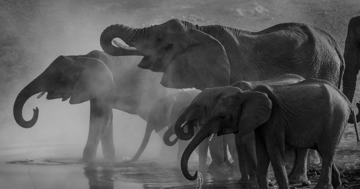 Covid-19 Comorbidities are the Elephant in the Room | by Steve McConnell | Aug, 2020 | Medium
