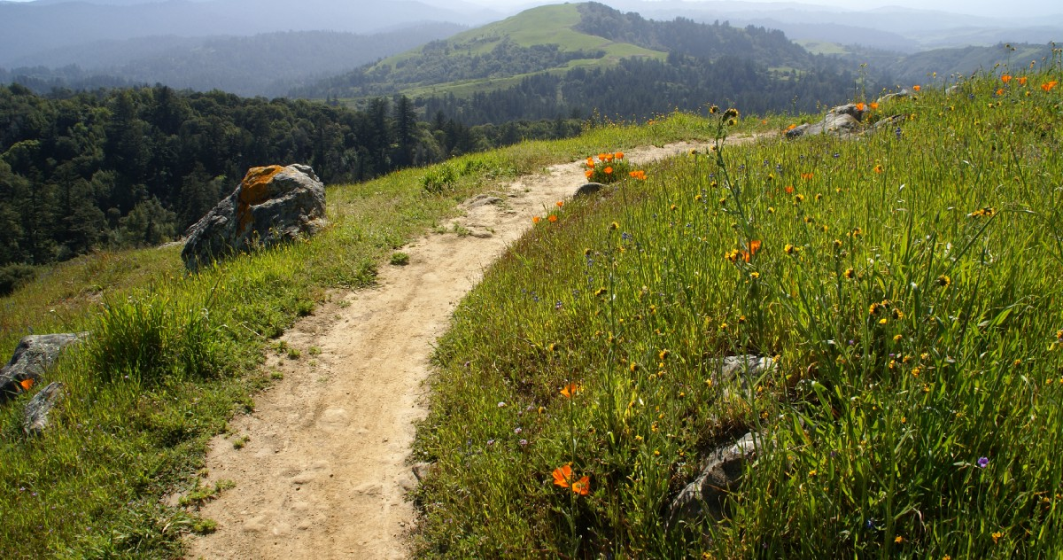 The Most Scenic and Spacious Hikes in the South Bay
