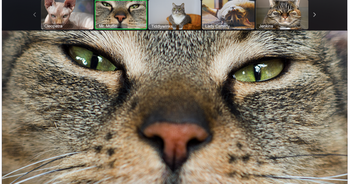 Every Type of Zoom Call Participant, Illustrated by Cats