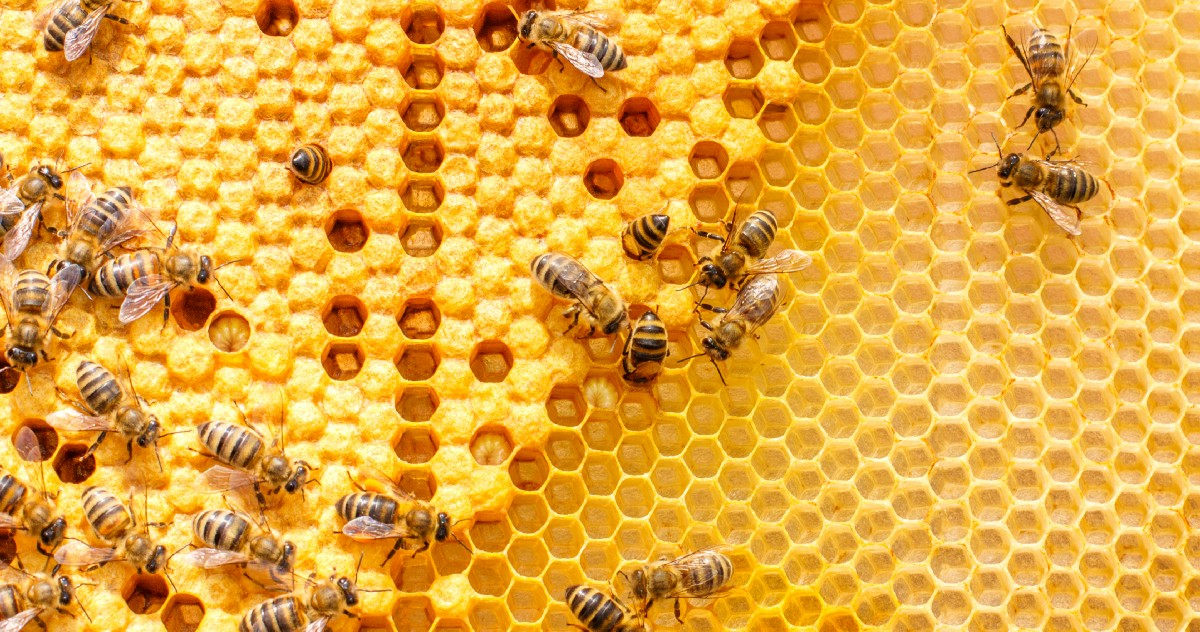 What Business Leaders Can Learn From Honeybees