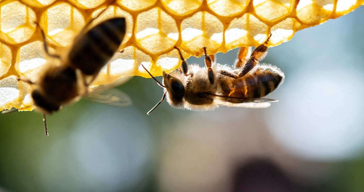Bee-Friendly Companies Are Getting the Science of the Crisis Completely Wrong