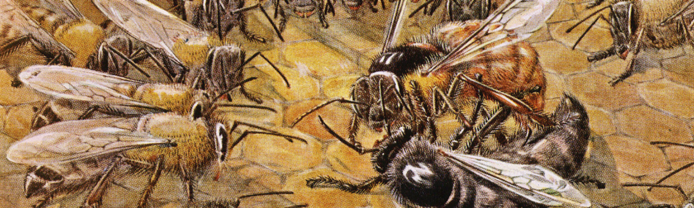 Art of bees communicating with each other in a hive.
