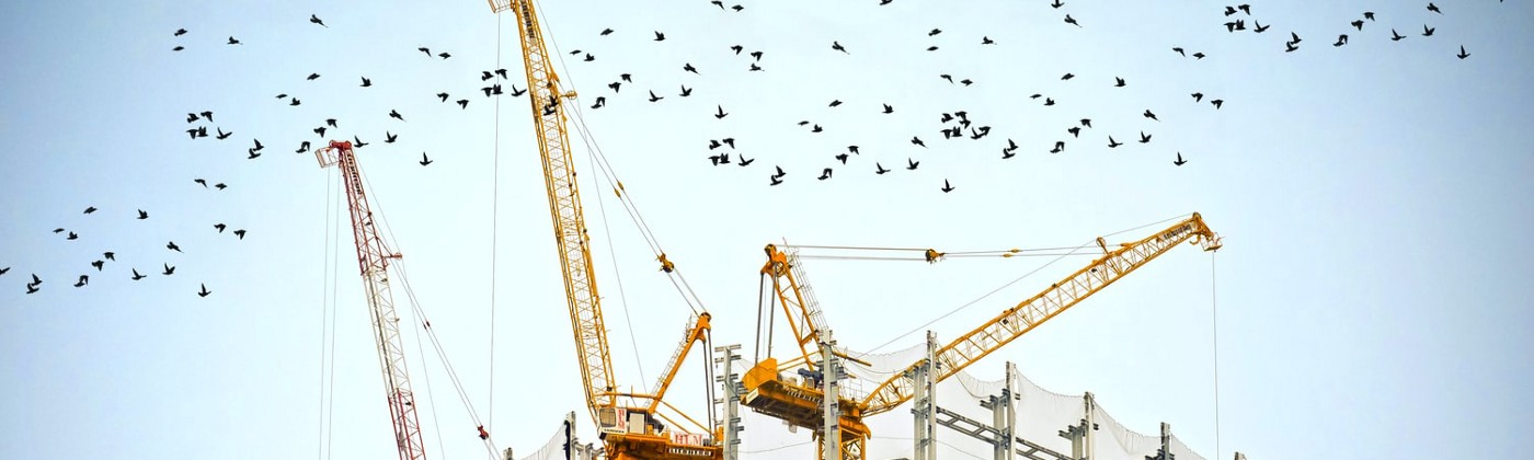 Construction cranes atop a building surrounded by a flock of birds.