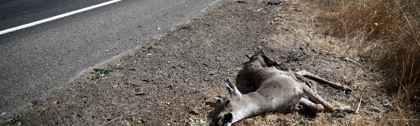 A photo of a dead deer on the side of the road.