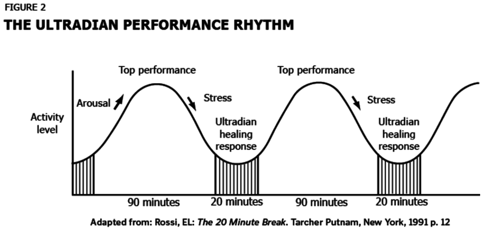 Ultradian Rhythm: How to Avoid Burnout and Boost Productivity