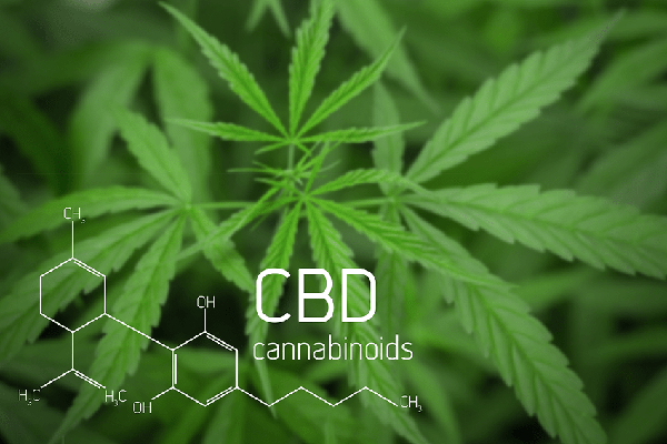 7 Life Changing Health Benefits of CBD for Seniors - CBD Origin - Medium