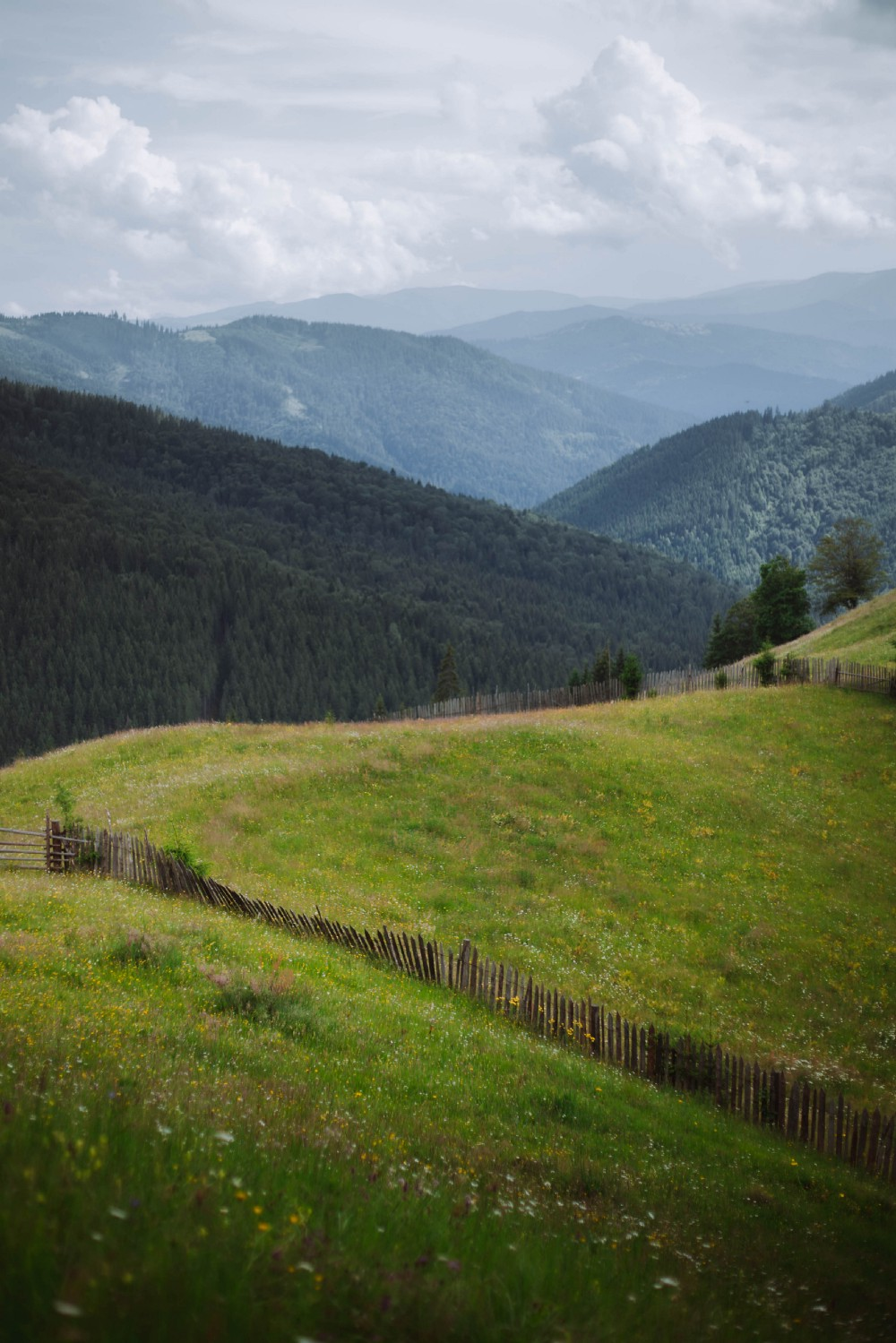 A hillscape with different elements, such as some hills are grassy and some are with trees.