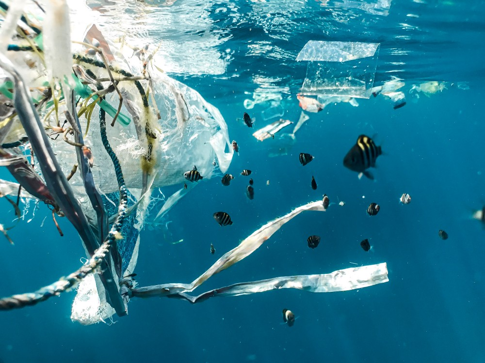 Plastic waste floating amongst tiny black and yellow fish just under the ocean's surface.