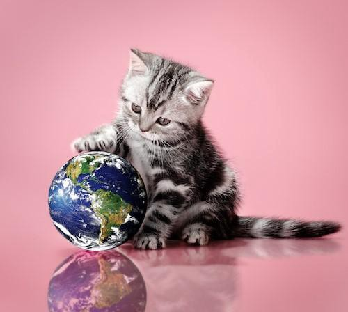 kitten playing with a globe