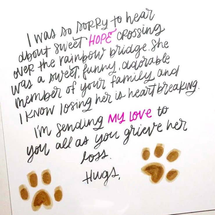Loss Of Pet >> What To Write In A Pet Sympathy Card Punkpost Medium