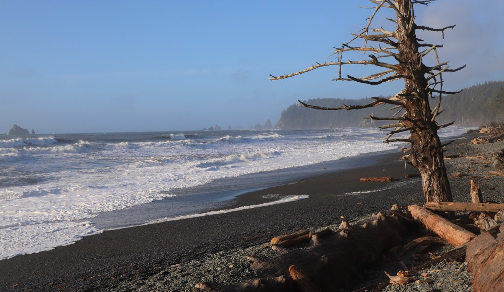 Ocean with waves, cliffs and a dead tree.