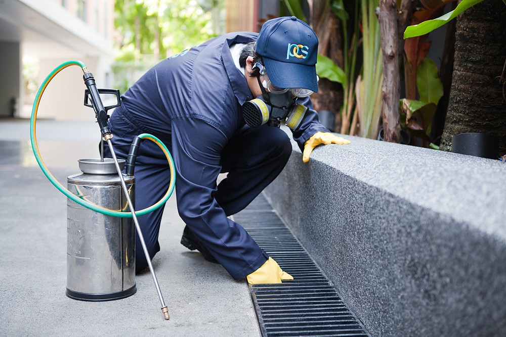How to Find a Perfect Residential Pest Control Solution for Your Home?