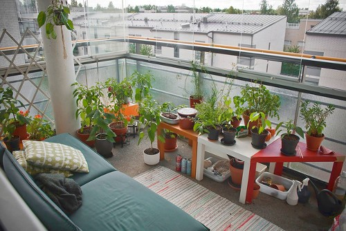 Turn Your Apartment Into A Small Garden