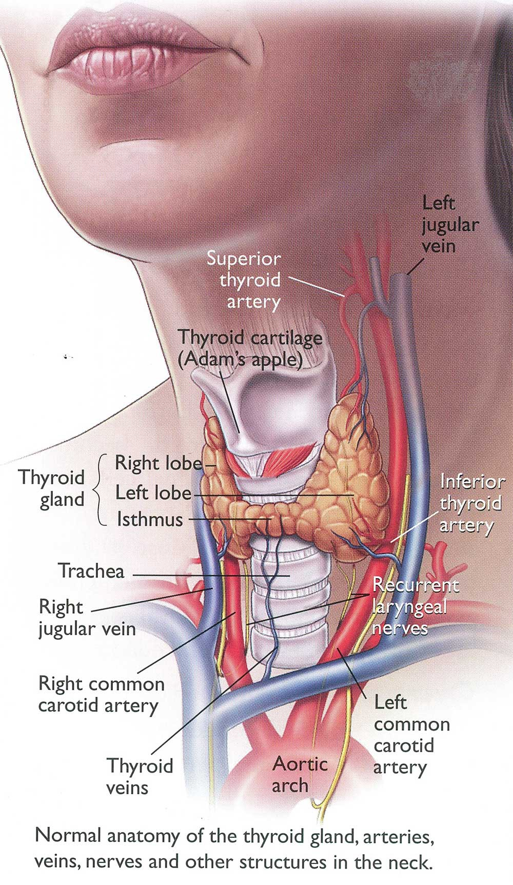 Home Remedies For Thyroid Problems By Sagarvansi Ayurveda Medium
