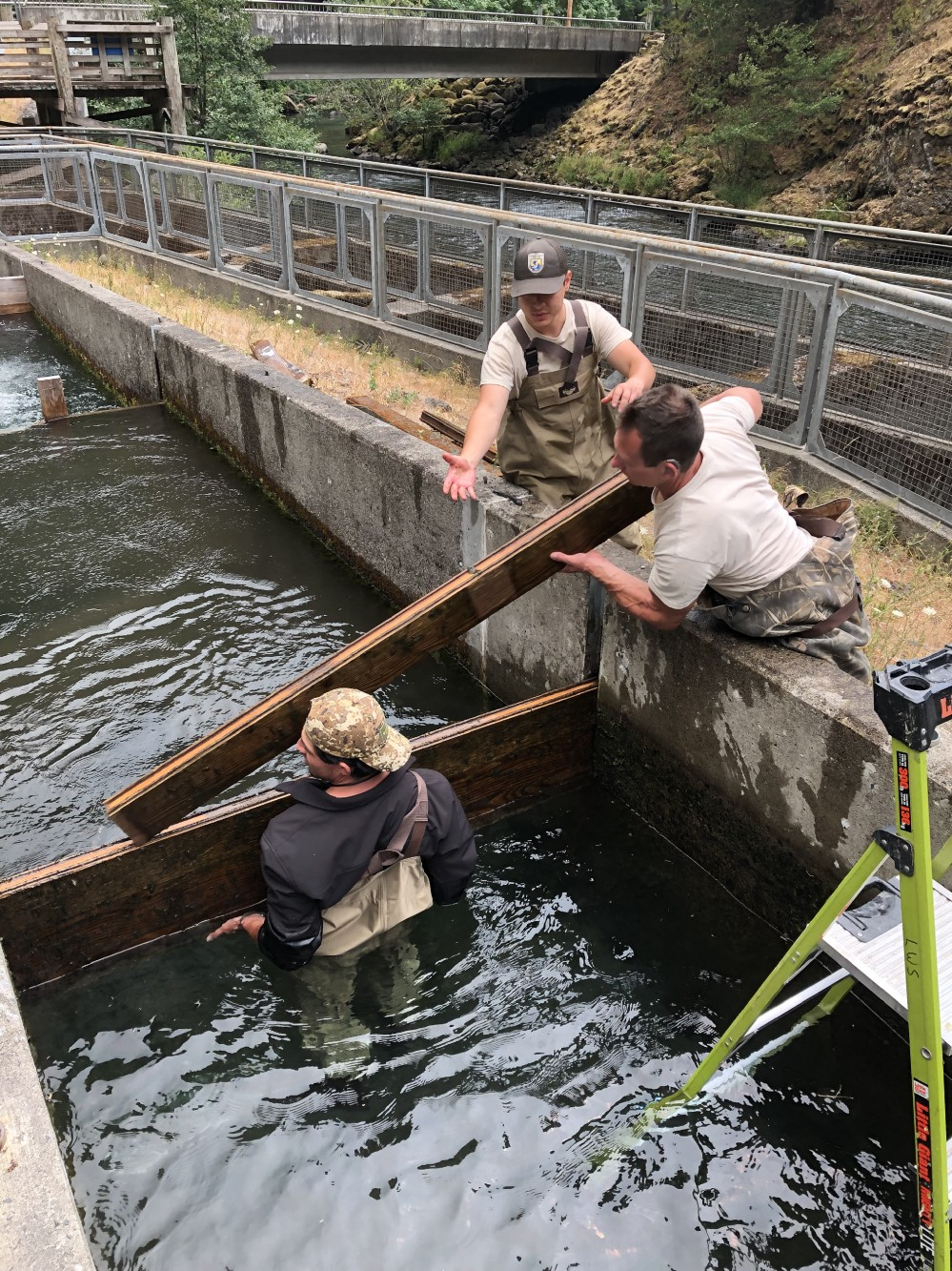 U.S. Fish and Wildlife Service staff remove the boards that kept fish from entering the fish ladder at Little White Salmon NFH. Photo by Cheri Anderson / USFWS