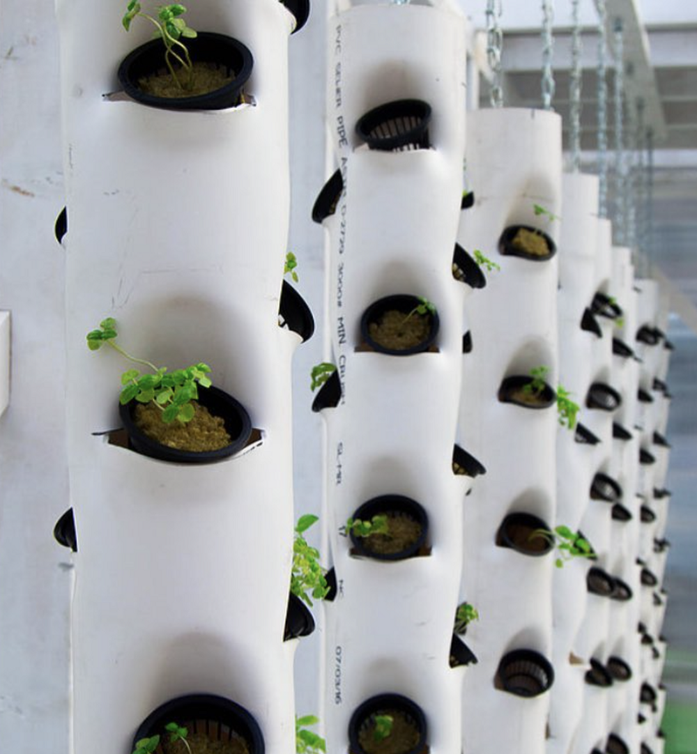 A row of vertical hydroponic systems made of pvc pipe are growing leafy greens.