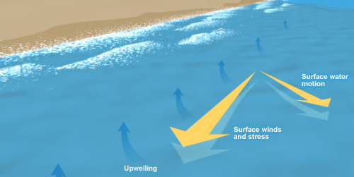 Diagram showing off shore winds pushing surface sea water away from the coast allowing deeper cold water to come up, termed upwelling.