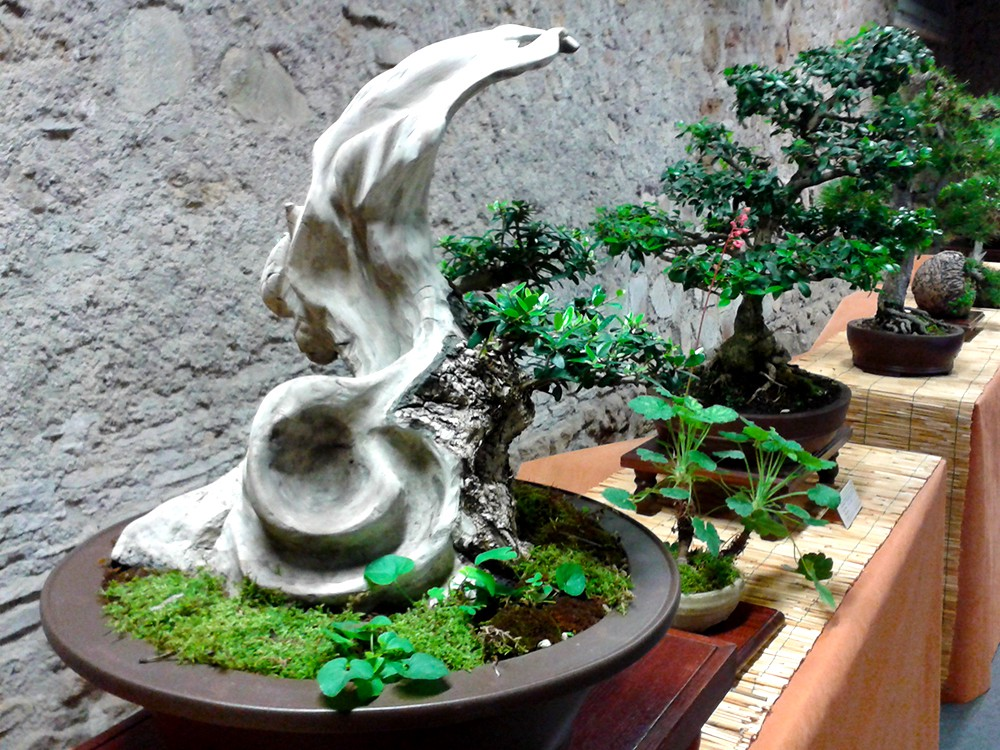 Bonsai Tree Market Industry Analysis With Forecast By 2024 By Vaidya D Medium