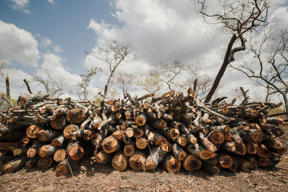 Chinese cooperation is good news for Mozambique's forests