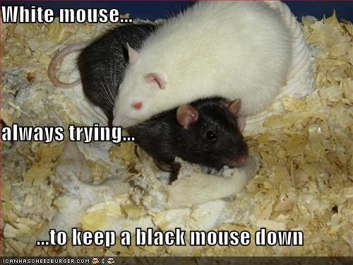 A white mouse on top of a black mouse: Text says White mouse always trying to keep a black mouse down