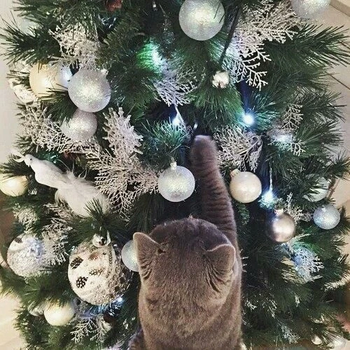 Christmas Tree Tumblr.This Week S Creative Sage Tumblr Collection Cathryn
