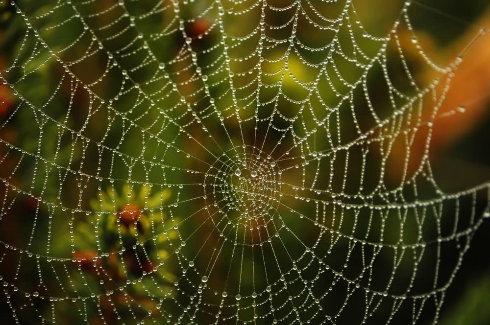 How to Perform Web-Scraping using Node js- Part 2 - Bits and
