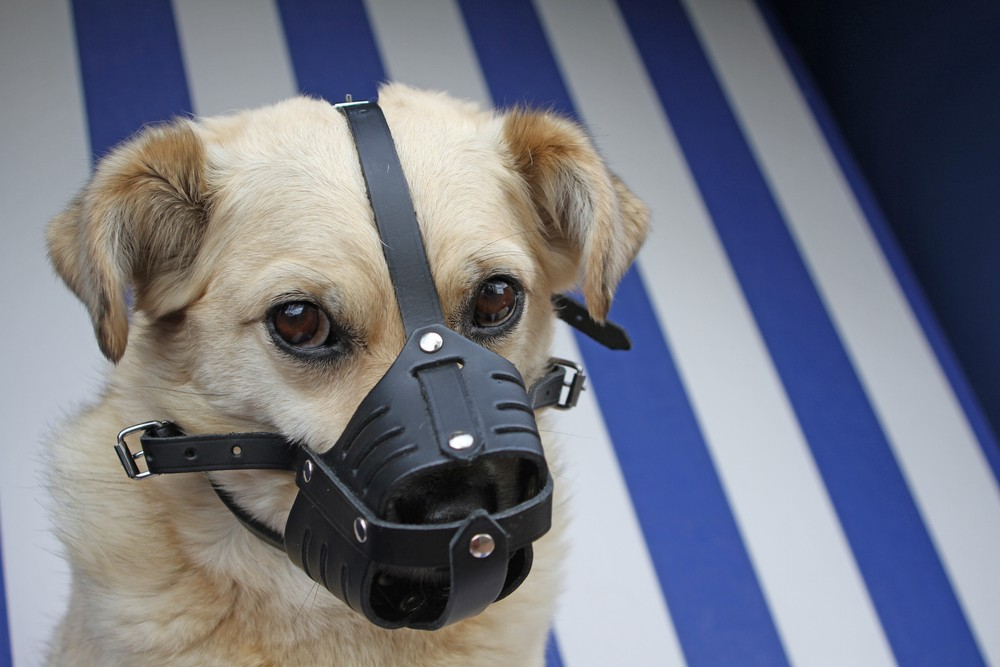 Why Nice Dogs Need Muzzles Too Mccann