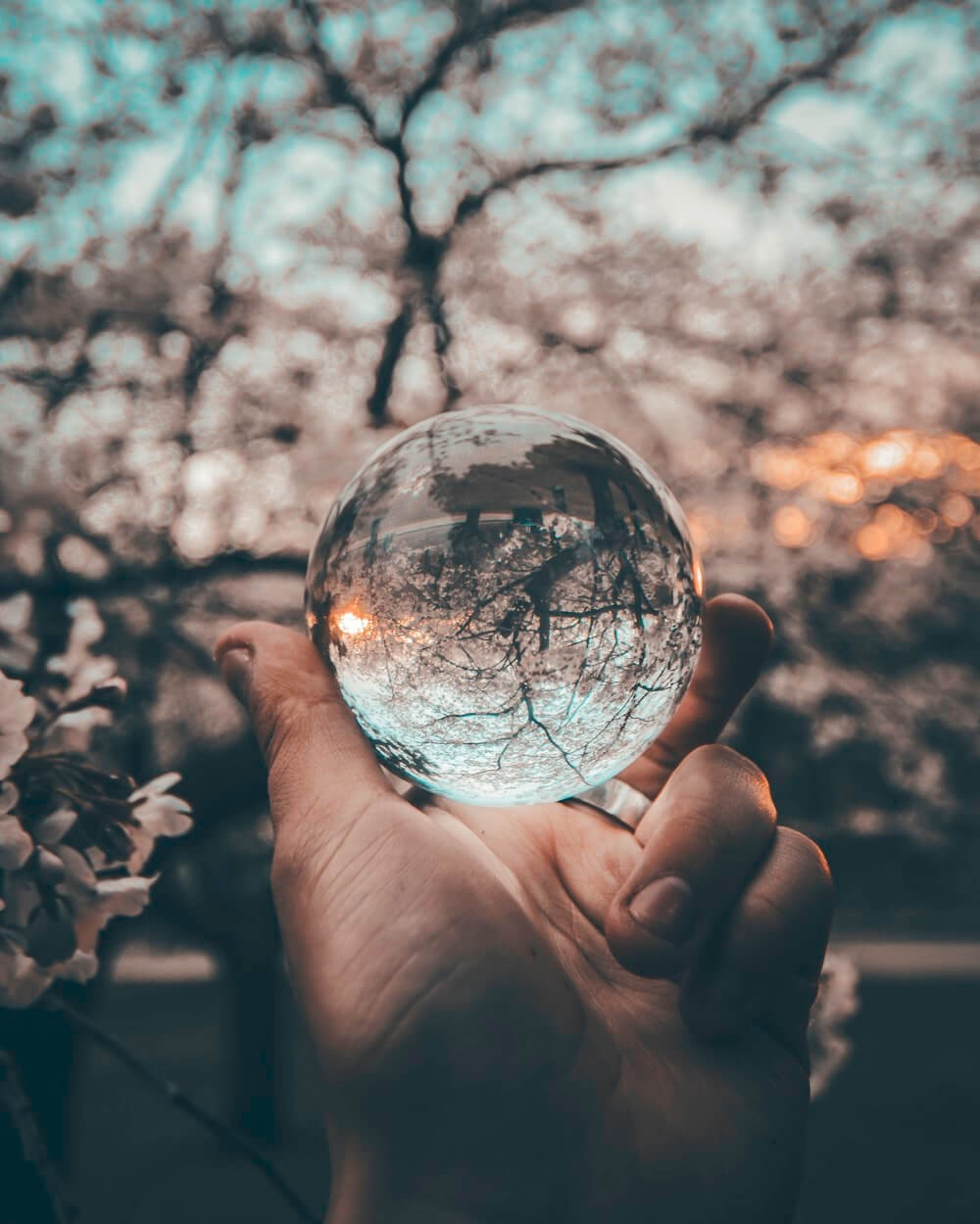 An hand holding a crystal ball with a white flowers blurred background