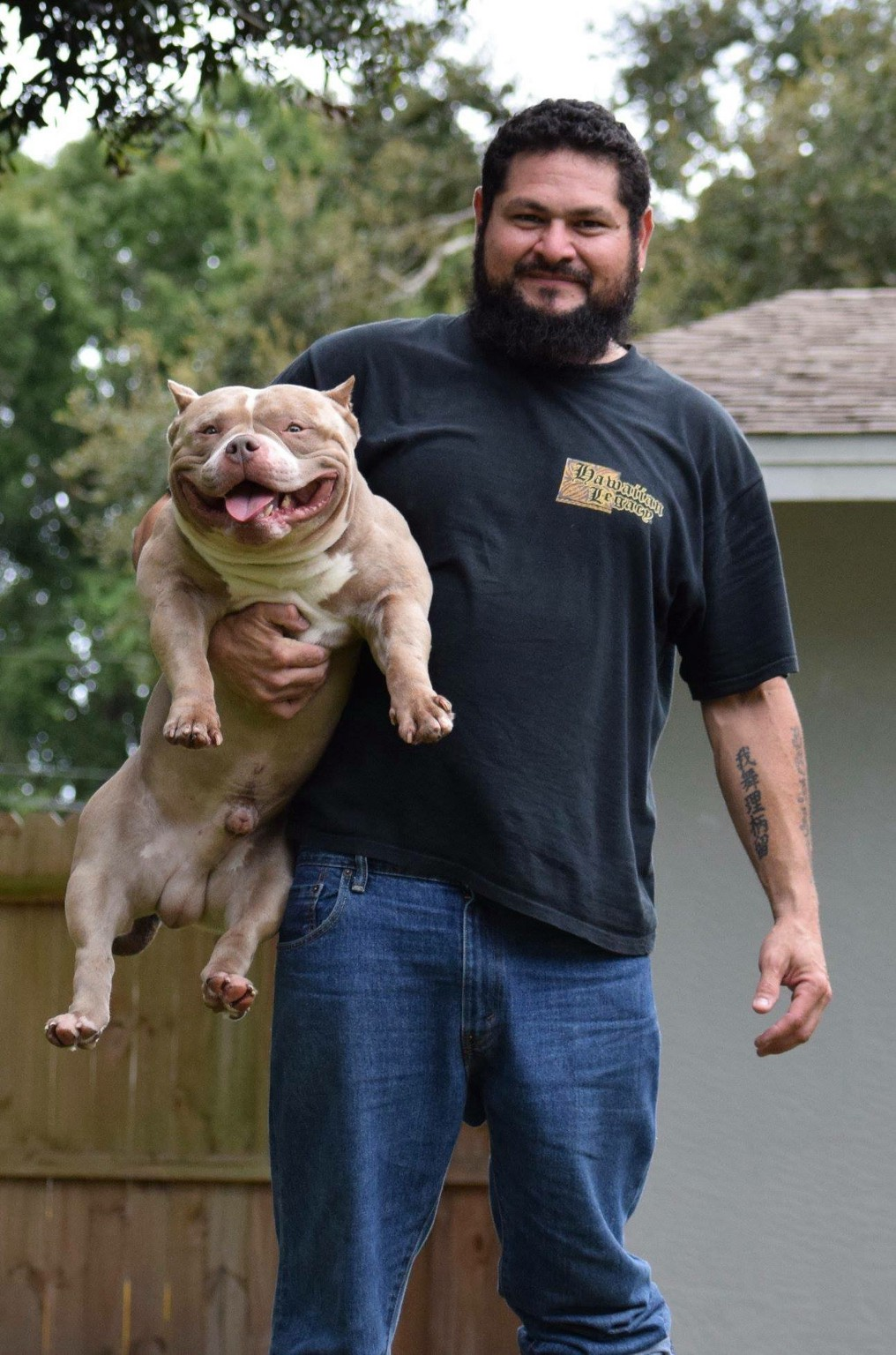 TOP POCKET AMERICAN BULLY BREEDERS - BULLY KING Magazine - Medium
