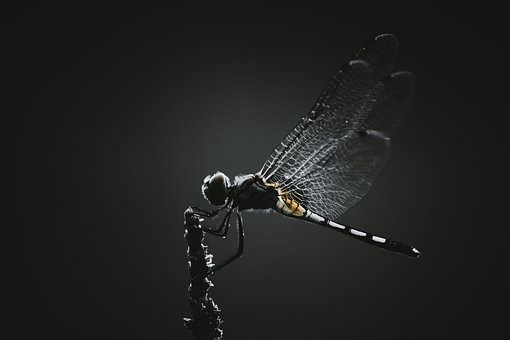 Dragonfly in shadow